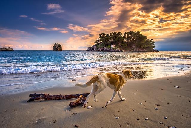 Vær opmærksom på disse ting, når hunden skal med på ferie